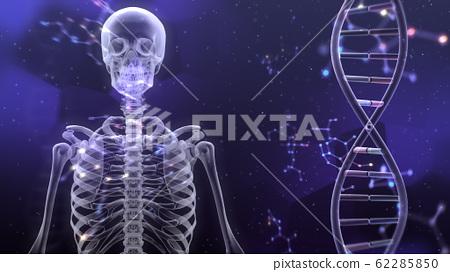 인체 뼈 메디컬 인간 체 의료 의학 두개골 엑스레이 3D 일러스트 CG 배경 62285850