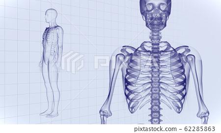 人体骨骼医学人体医学医学科学头骨X射线3d图CG背景 62285863