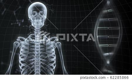 ร่างกายมนุษย์กระดูกแพทย์ร่างกายมนุษย์ยาวิทยาศาสตร์การแพทย์กะโหลก x-ray 3d ประกอบฉากหลัง CG 62285866