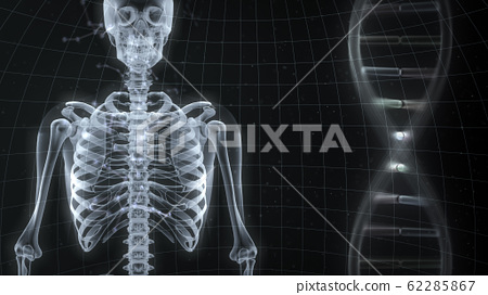 Human body bone medical human body medicine medical science skull x-ray 3d illustration CG background 62285867