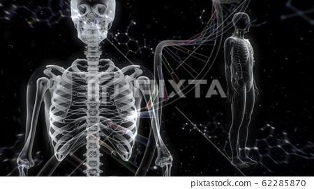 Human body bone medical human body medicine medical science skull x-ray 3d illustration CG background 62285870