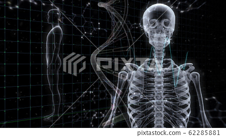 인체 뼈 메디컬 인간 체 의료 의학 두개골 엑스레이 3D 일러스트 CG 배경 62285881