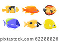 Tropical Fish with Bright Coloration Isolated on White Background Vector Set 62288826