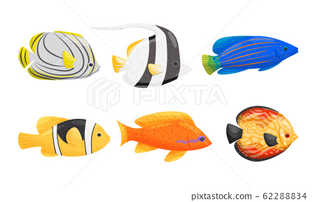 Tropical Fish with Bright Coloration Isolated on White Background Vector Set 62288834