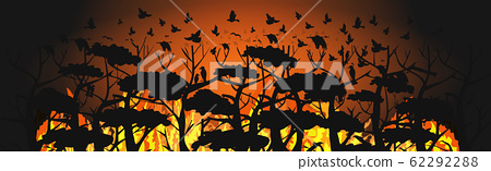 birds silhouettes flying over wildfire forest escaping from fires in australia animals dying in bushfire natural disaster concept intense orange flames horizontal vector illustration 62292288