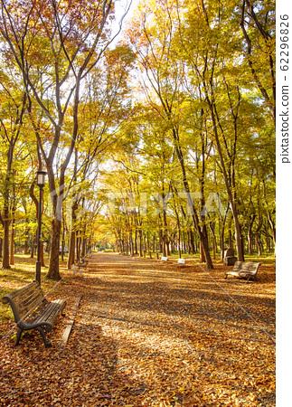 大阪城公園的秋葉,秋天的大阪城森林漫步 62296826