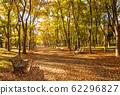 大阪城公園的秋葉,秋天的大阪城森林漫步 62296827