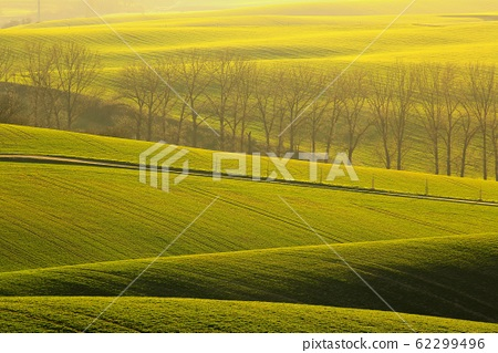 A tree alley in a rolling spring green field with 62299496