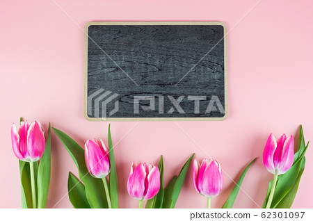 Pink tulip flower on blue wood table background 62301097