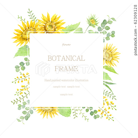 向日葵和黃色的植物框架水彩插圖 62309128