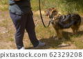Woman volunteers walking with the dog 62329208