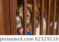 Face of the dog in a cage 62329210