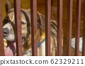 Face of the dog in a cage 62329211