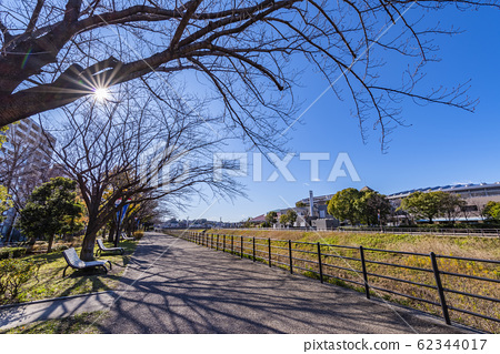 Shin-Yokohama Station Park Bench and Tree-lined Path 62344017