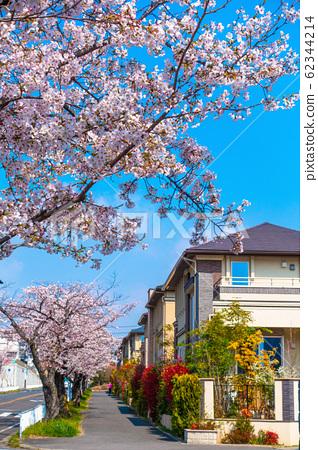전주없는 거리와 벚꽃 62344214