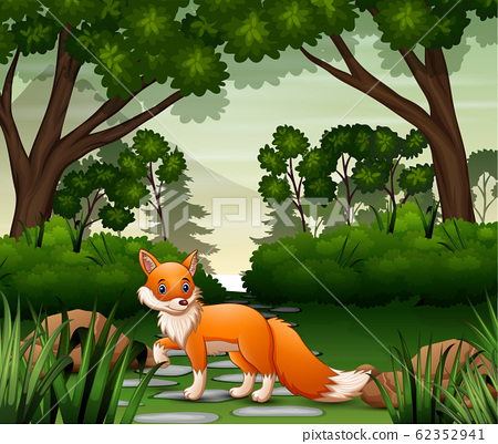 A fox looking for prey at forest scene 62352941