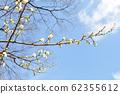 매화 나무와 푸른 하늘 62355612