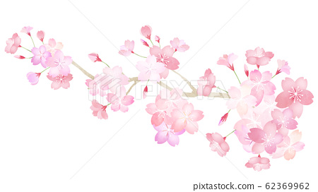 材質零件-櫻花樹枝-春天-日本-日本風格-日本圖案-日本紙-日本 62369962