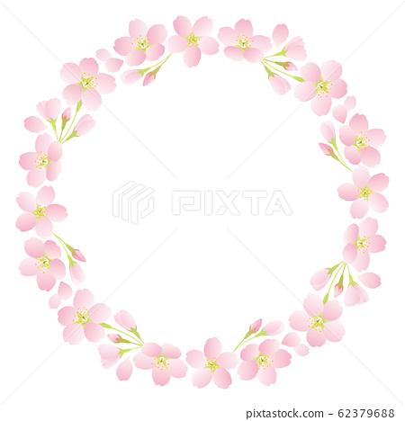 임대 _ 벚꽃 사쿠라 왕 벚꽃 나무 62379688