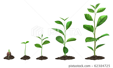 Realistic plant growth stages. Young seed growing in ground, green plants in soil, spring sprout blooming stage, isolated vector illustration set 62384725