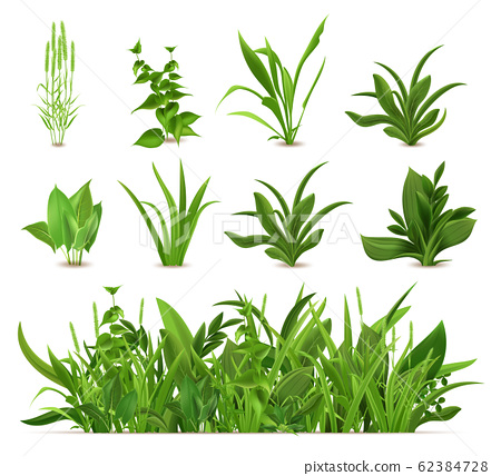 Green realistic spring grass. Fresh plants, garden seasonal growth grass, botanical greens, herbs and leaves vector isolated icons set 62384728