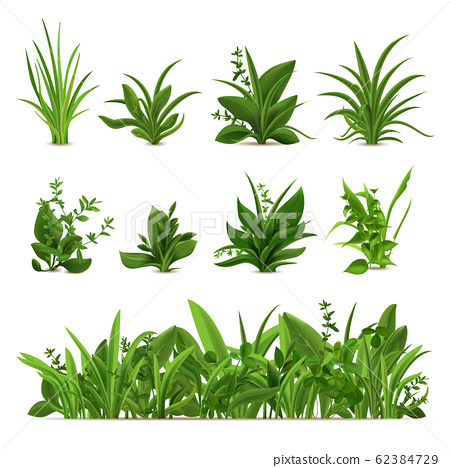 Realistic grass bushes. Green fresh plants, garden seasonal spring greens and herbs, botanical sprout vector isolated icons set 62384729