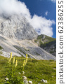 Mountain flora near Mangart, Triglav national 62386255