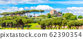 Palatine hill with umbrella pines on sunny summer day. Panoramic view. Rome, Italy 62390354