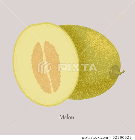 Fruit melon. Whole ripe sweet fruit with sliced juicy piece of cut. 62390625