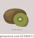 Actinidia deliciosa, whole fruit and half. Kiwi summer fruits. 62390671