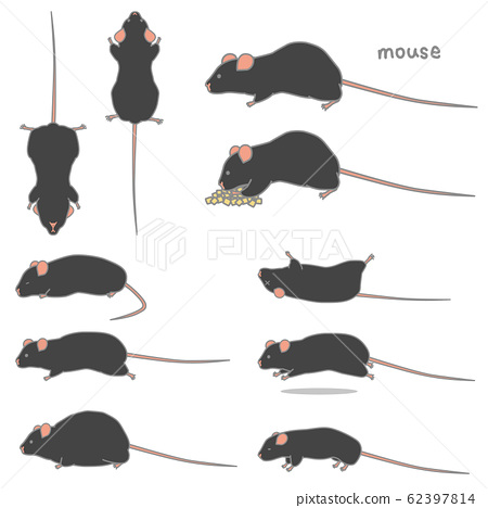 黑色老鼠的矢量插图集(餐,倾斜,脂肪,俯卧,运行,脂肪,瘦) 62397814