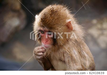 地獄谷猴子公園雪猴雪猴 62410639
