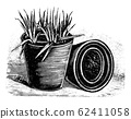 Vintage Antique Line Art Illustration, Drawing or Engraving of Small Plants in Flower or Plant Pot 62411058
