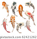 Set calmly floating fish. Koi fish vector illustration japanese carp and colorful oriental koi in Asia. Set of Chinese goldfish, traditional fishery isolated on background 62421262