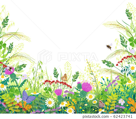 Colorful Frame with Summer Meadow Plants and 62423741