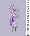 紫色的花 62426531