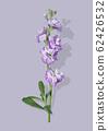 紫色的花 62426532