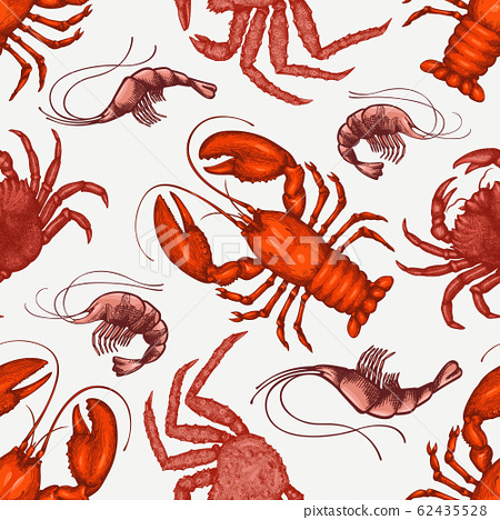 Seafood design template. Hand drawn vector seafood 62435528