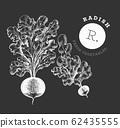 Hand drawn sketch style radish. Organic fresh food 62435555