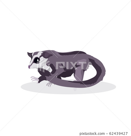 raccoon icon cartoon endangered wild australian animal symbol wildlife species fauna concept flat 62439427