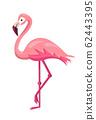 Flamingo bird illustration design on background 62443395