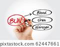BUN - Blood Urea Nitrogen acronym 62447661