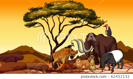 African animals in the field 62452132