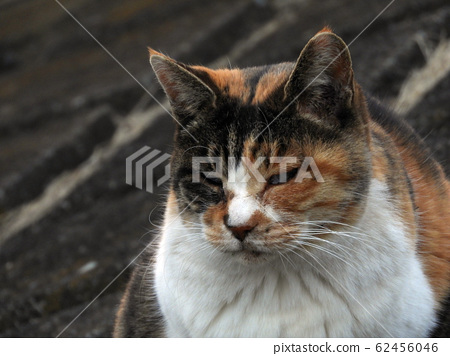Stray cat on the bank 62456046