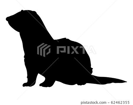 剪影動物/寵物雪貂0端莊 62462355