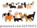 Different dogs breeds collection 62476472