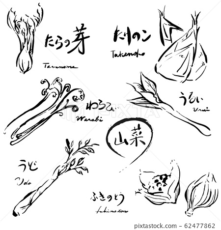 野生植物設置單色手繪 62477862
