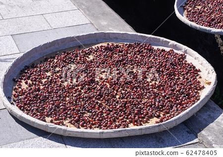 咖啡 咖啡豆 原料 曝曬 自然 Natural raw coffee beans コーヒー豆  62478405
