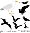 seagull illustration and silhouettes 62483348