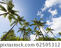 Palm trees and blue sky perming Hawaii landscape stock Photos-photolibrary 62505312